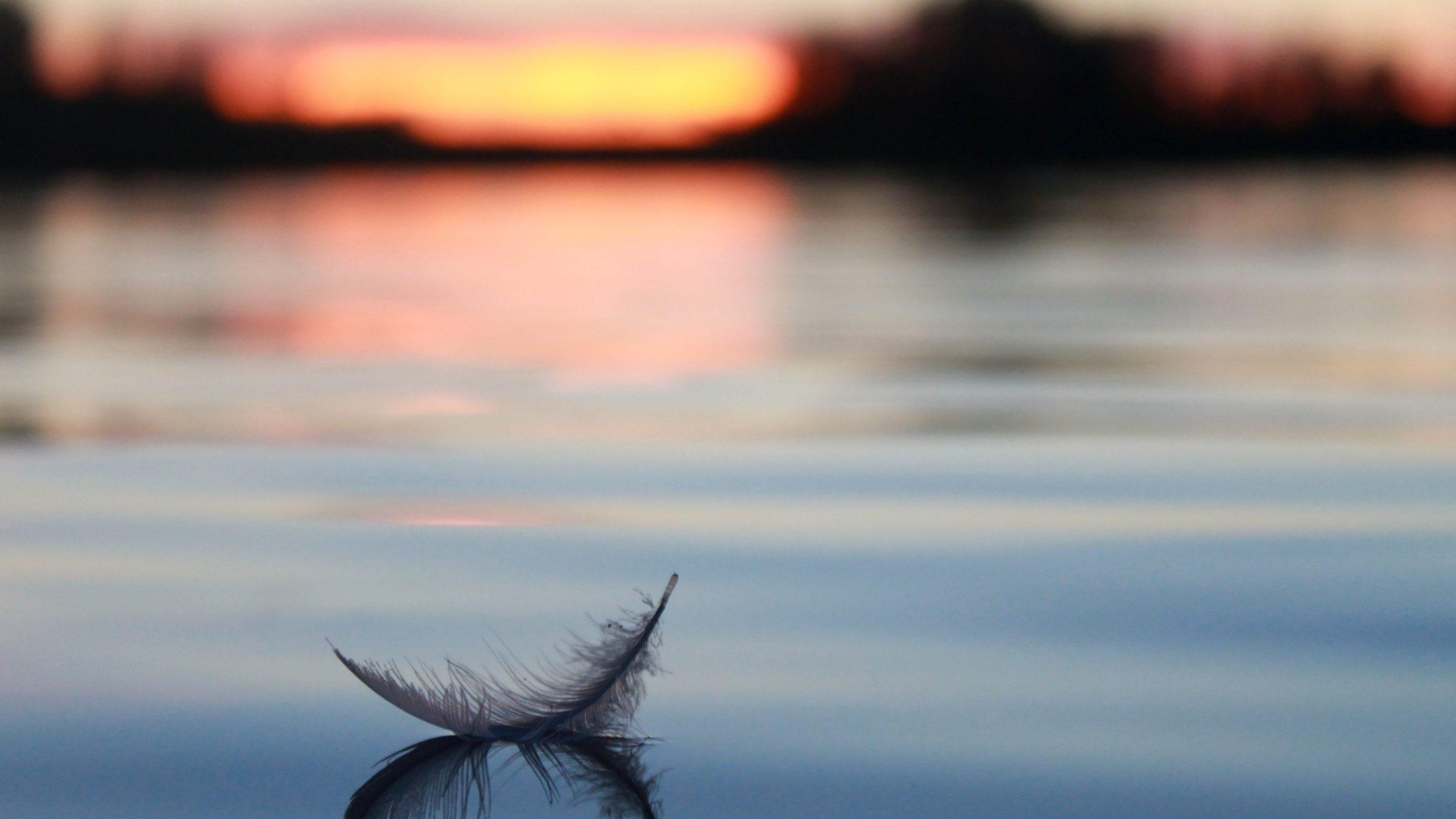 Mindful Living (online workshop)(Postponed until the Fall)